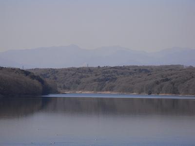 2010013006